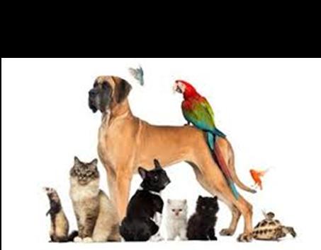 Dla zwierząt domowych